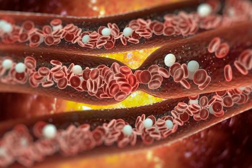 vitamín B1 thiamin cévy